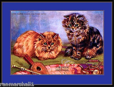 English Picture Long Haired Ginger Tabby Kitten Cat Cats Kittens Art Poster