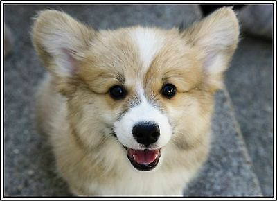 4 Dog Pembroke Welsh Corgi Puppy #3 Dogs Puppies Greeting Notecards/ Envelopes