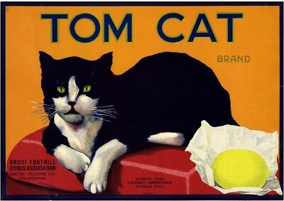 Orosi Tulare County Tom Cat Lemon Citrus Fruit Crate Label Vintage Art Print