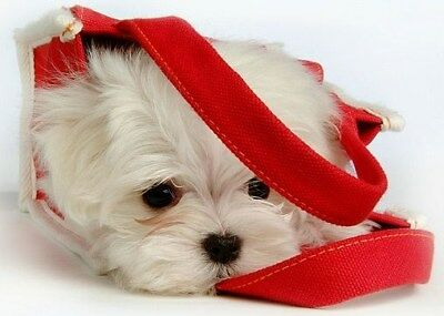 4 Dog Maltese Puppy Greeting Notecards/ Envelopes