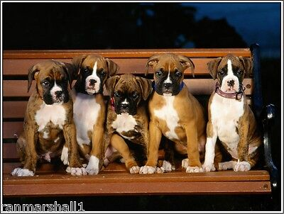 Pack of 4 Puppy Dog Boxer Dogs puppies Stationery Greeting Notecards / Envelopes