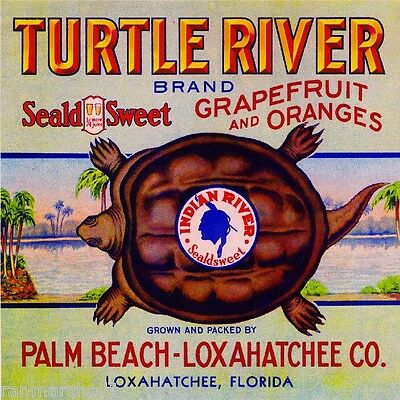 Loxahatchee Palm Beach Florida Turtle River Orange Fruit Crate Label Print