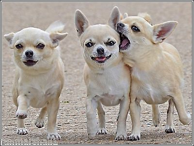 4Pack Dog Dogs Puppies Puppy Chihuahua Stationery Greeting Notecards/ Envelopes