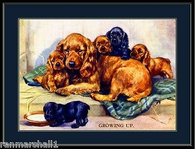 English Print Cocker Spaniel Dog Puppy Dogs Puppies Art Picture Vintage Poster