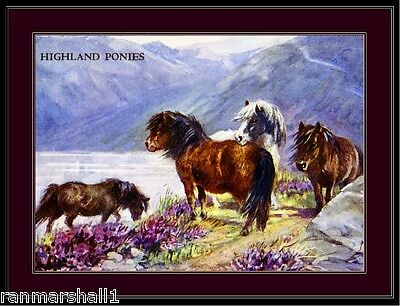 English Picture Print Highland Ponies Horse Art