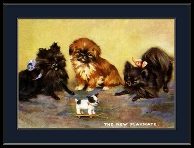 Print Pomeranian Pekingese Dog Puppies Puppy Dogs Art Picture Poster