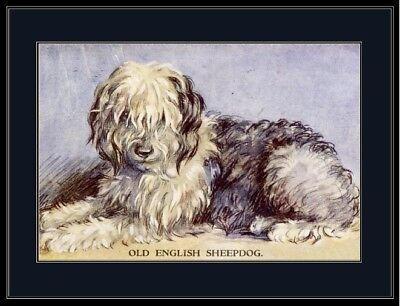 English Picture Print Old English Sheepdog Puppy Dog Art Poster