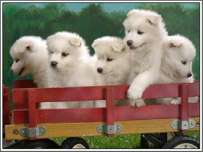 Pack of 4 Samoyed Puppy Dog Stationery Greeting Notecards/ Envelopes