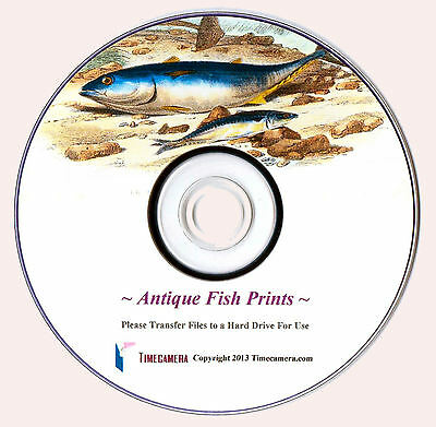 ANTIQUE FISH PRINTS - Restored & High Res., Print-Making Images DVD-Rom