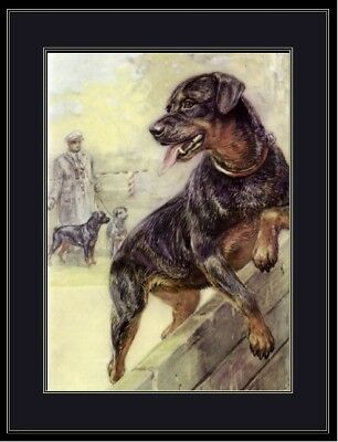 English Print Rottweiler Dog Art Picture