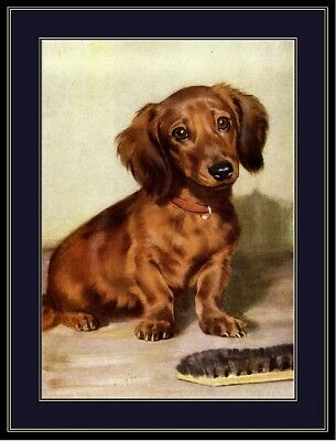 English Print Dachshund Doxie Long Haired Puppy Dog Vintage Art Poster Picture