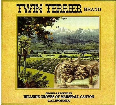 Marshall Canyon Twin Cairn Terrier Dog Orange Citrus Fruit Crate Label Art Print