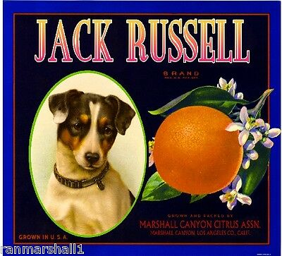Marshall Canyon Jack Russell Puppy Dog Orange Citrus Fruit Crate Label Art Print