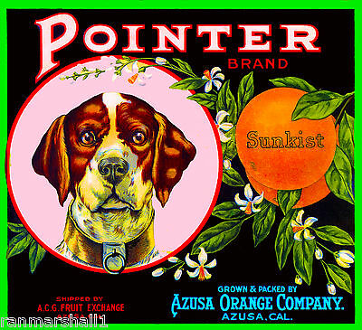 Azusa German Pointer Dog #5 Orange Citrus Fruit Crate Label Art Print