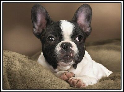 Set of 4 Puppy Dog Boston Terrier Dogs Stationery Greeting Notecards / Envelopes
