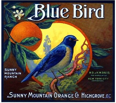 Highgrove Blue Bird Bluebird Orange Citrus Fruit Crate Label Art Print