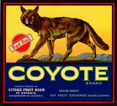 Upland Coyote Orange Citrus Fruit Crate Label Art Print