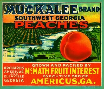 AMERICUS GEORGIA MUCKALEE Peach Georgia Peaches Fruit Crate Label Art Print