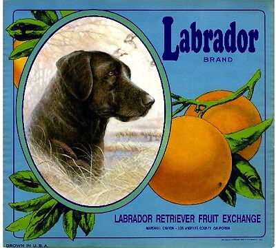 Marshall Canyon Labrador Retriever Dog Orange Citrus Fruit Crate Label Art Print