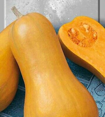 Seeds Pumpkin Arabat Original Rare Russian Heirloom Vegetable Seed