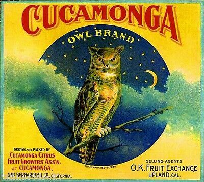 Cucamonga San Bernardino Upland Owl Orange Citrus Fruit Crate Label Art Print