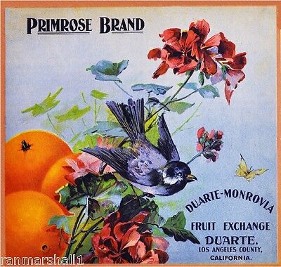 Duarte Monrovia Primrose Bluebird Bird Orange Citrus Fruit Crate Label Art Print