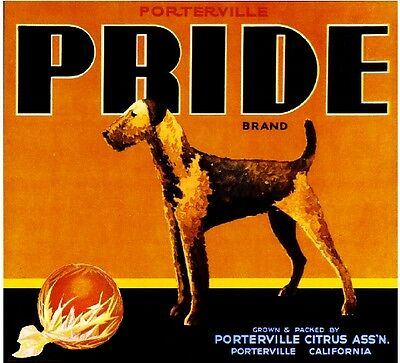 Porterville Pride Airedale Terrier Dog Orange Citrus Fruit Crate Label Art Print