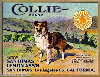San Dimas Collie Dog #2 Lemon Citrus Fruit Crate Label Art Print