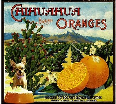 Marshall Canyon Siamese Cat #2 Kitten Orange Citrus Fruit Crate Label Art Print