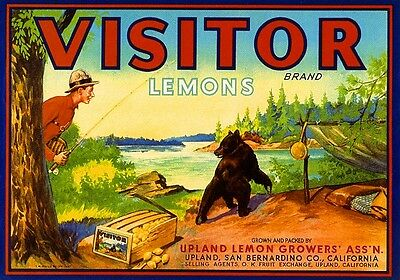 Upland Visitor Baby Grizzly Bear Cub Lemon Citrus Fruit Crate Label Art Print
