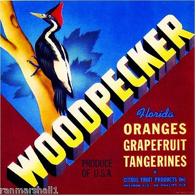 Orlando Florida Woodpecker Bird Orange Citrus Fruit Crate Label Art Print