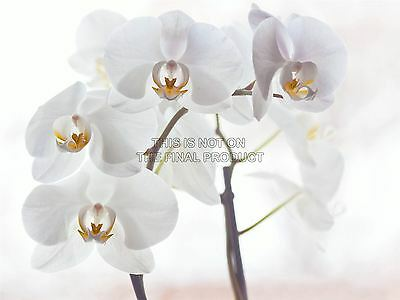 ORCHID FLOWERS WHITE PHOTO FINE ART PRINT POSTER HOME DECOR PICTURE BMP027B