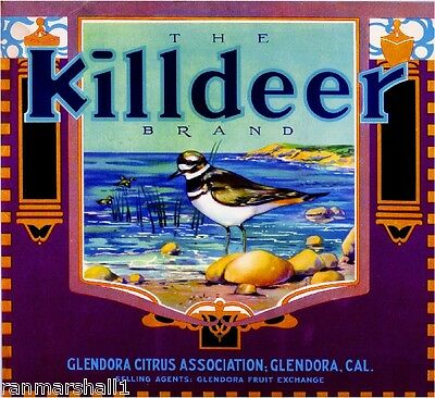 Glendora Los Angeles Killdeer Bird Orange Citrus Fruit Crate Label Art Print