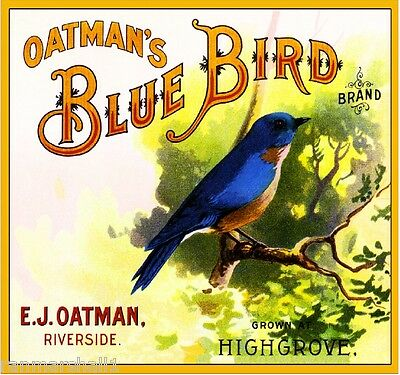 Highgrove Oatman's Blue Bird Bluebird Orange Citrus Fruit Crate Label Art Print