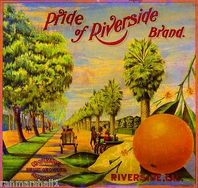 Riverside California Pride of Magnolia Orange Citrus Fruit Crate Label Art Print