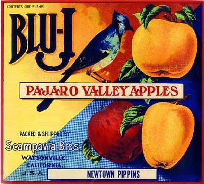 Watsonville California Blu-J  Blue Jay Bird Apple Fruit Crate Label Art Print