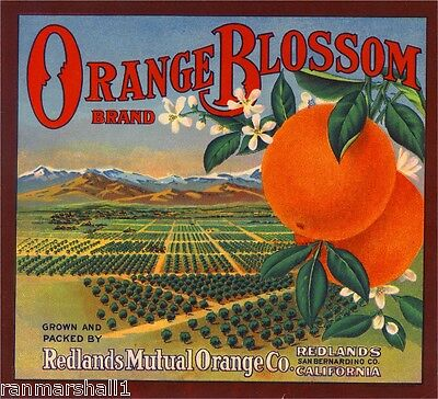Redlands San Bernardino Orange Blossom Orange Citrus Fruit Crate Label Art Print
