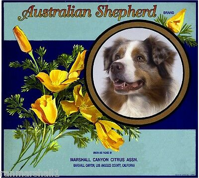 Marshall Canyon Australian Shepherd Orange Citrus Fruit Crate Label Art Print