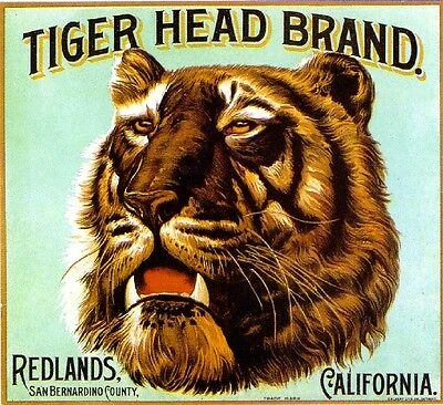 Redlands Tiger Head #2 Orange Citrus Fruit Crate Label Art Print