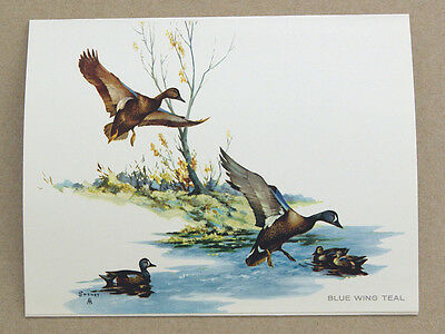 Vintage 1971 Fred Sweney Blue Winged Teal Fold Out Art Card Print