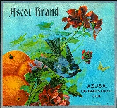 Azusa Ascot BlueBird Bird and Flowers Orange Citrus Fruit Crate Label Art Print