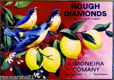Santa Paula Ventura Rough Diamonds Bluebirds Lemon Citrus Crate Label Art Print
