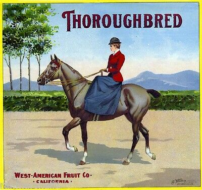 Los Angeles Thoroughbred Horse Orange Citrus Fruit Crate Box Label Art Print