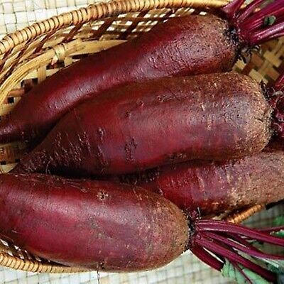 Seeds Red Beet Tsylindra Cylinder Organically Grown Russian Heirloom Vegetable