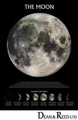 The Moon (Phases) - Maxi Poster - 61cm x 91.5cm PP0432 (0273)