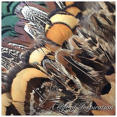 Mix of 25 Amazing Pheasant feathers 5 of each colour DIY Art Craft Millinery