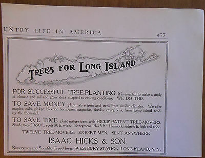 1906 vintage AD Isaac Hicks & Son Trees for Long Island New York