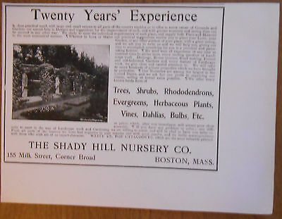 1906 vintage AD Shady Hill Nursery Co 20 Years Experience landscaping, gardening