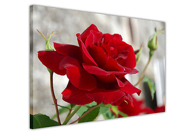 Red Rose Large Canvas Wall Art Pictures / Prints Flower Photos Decoration Green