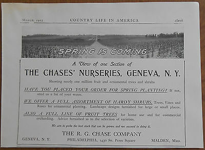 1903 vintage AD The Chases' Nurseries Geneva New York gardening R.G. Chase Co